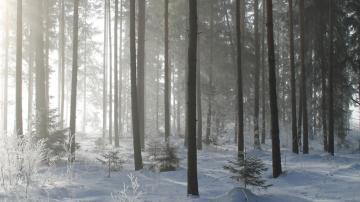 冰天雪地里的唯美风光高清壁纸-好运图库