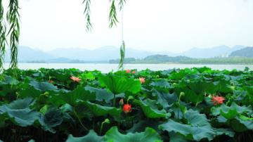 杭州的西湖美景高清壁纸-好运图库