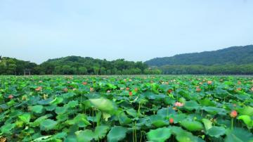 杭州的西湖美景