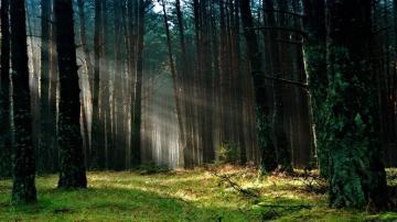 唯美护眼森林公园-高清壁纸图片-好运图库