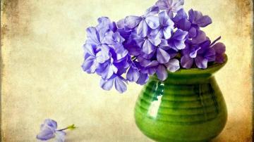 福禄考花海,高清壁纸图片,鲜花背景-好运图库