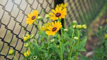 期许一场花开,高清壁纸图片,鲜花背景-好运图库