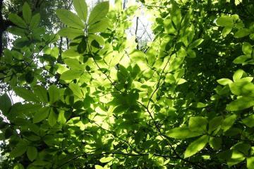 郁郁葱葱的绿叶,高清壁纸图片,植物绿叶-好运图库