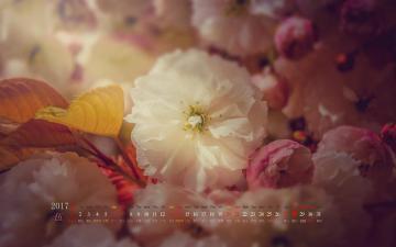 2017年5月花卉日历,农历,月历壁纸-好运图库