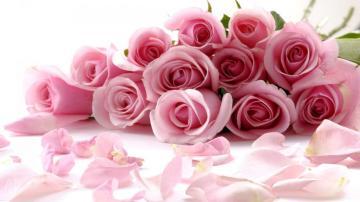 繁花似锦玫瑰秀高清壁纸图片-好运图库