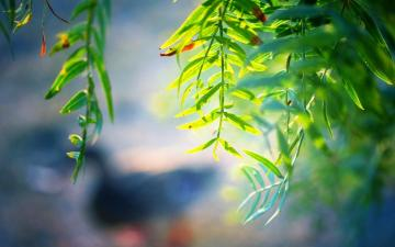 微距下的绿色叶子,高清壁纸图片,植物绿叶-好运图库