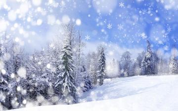 美丽的雪景和松树,高清壁纸,风景图片-好运图库