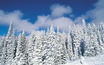 冬天森林雪景,高清壁纸,风景图片-好运图库