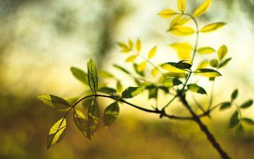阳光下的叶子,高清壁纸图片,植物绿叶-好运图库