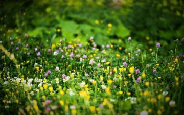 阳光唯美意境花朵,高清壁纸图片,鲜花背景-好运图库