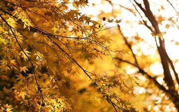 温暖阳光下的森林高清壁纸-好运图库