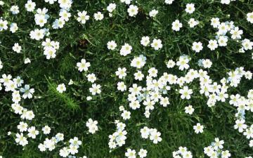 浪漫白色鲜花