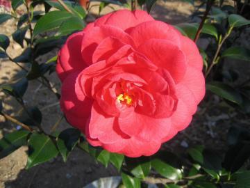 一品红花-高清壁纸图片-好运图库