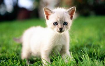 小猫咪 第一辑高清图片-好运图库