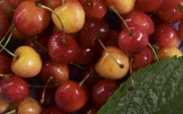 宽屏系列【五】水果图集2560x1600,高清壁纸图片,水果蔬菜-好运图库