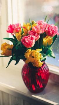 郁金香是美好的象征,锁屏图片,手机壁纸,植物-好运图库