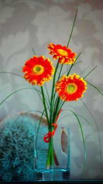 花开半夏,锁屏图片,手机壁纸,植物-好运图库