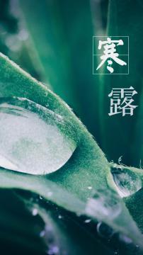 寒露的水气容易凝结成霜,锁屏图片,手机壁纸,植物-好运图库
