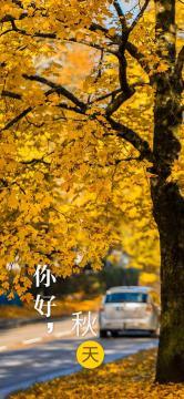秋天,叶子一片片落下-高清手机壁纸-好运图库