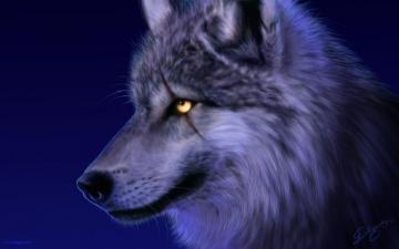 狼族世界高清图片-好运图库
