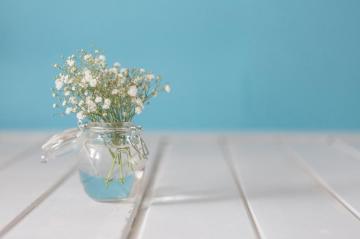人生就像室外的盆栽里栽种的一株植物,高清壁纸图片,鲜花背景-好运图库