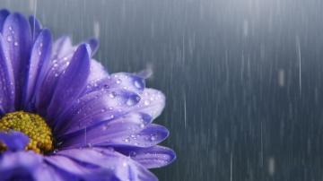 那些经历风雨的花儿,高清壁纸图片,鲜花背景-好运图库