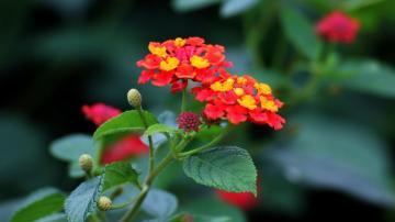 五色梅花,高清壁纸图片,鲜花背景-好运图库