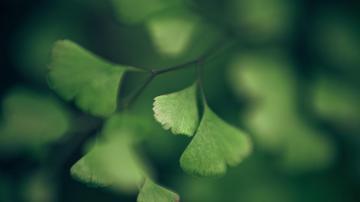 能保护眼睛的清新绿色植物,高清壁纸,风景图片-好运图库