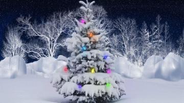 下雪的圣诞树