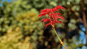 红叶,秋天最后的抒情,高清壁纸,风景图片-好运图库