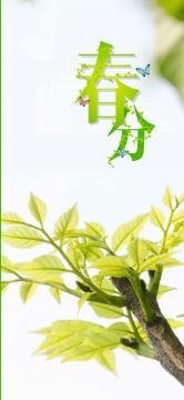 清新绿色春分节气-高清手机壁纸-好运图库