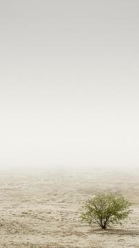沙漠里唯一的一棵树,锁屏图片,高清手机壁纸,风景-好运图库