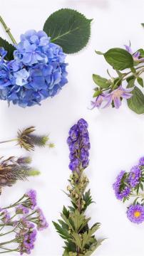 创意花卉唯美摆设图片,锁屏图片,高清手机壁纸,非主流-好运图库