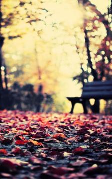 秋叶长凳公园高清手机壁纸-好运图库