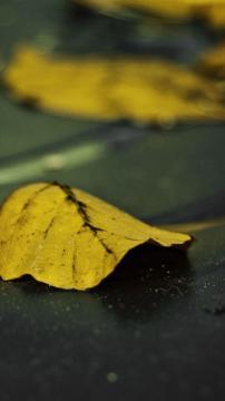 街道上黄色落叶-高清手机壁纸-风景-好运图库
