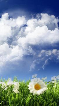 白花绿色田野,锁屏图片,高清手机壁纸,风景-好运图库