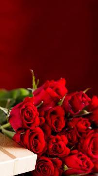 绽放的玫瑰花,锁屏图片,手机壁纸,植物-好运图库