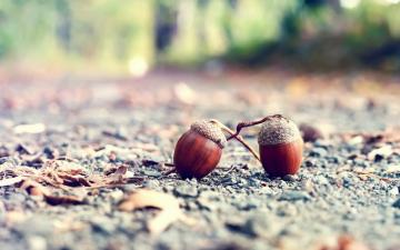 栎树果实橡子高清图片-好运图库