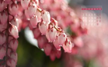 2015年2月清新花草日历,农历,月历壁纸-好运图库