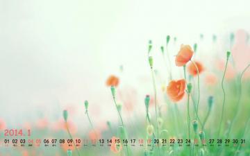 2014年1月清新日历,农历,月历壁纸-好运图库