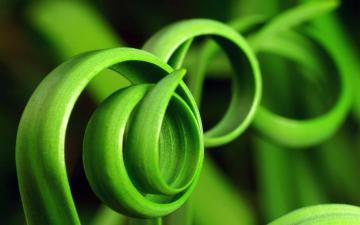 叶子唯美图片,高清壁纸图片,植物绿叶-好运图库