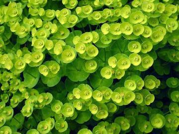 小清新绿色叶子,高清壁纸图片,植物绿叶-好运图库