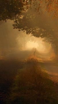 昏暗的秋天森林公路,锁屏图片,高清手机壁纸,风景-好运图库