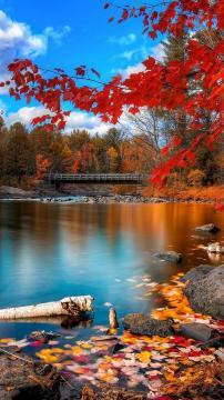 木河桥红色秋叶,锁屏图片,高清手机壁纸,风景-好运图库