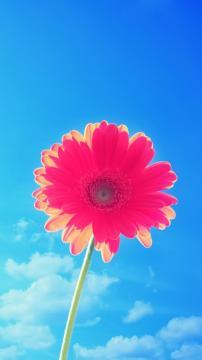粉红色的花和蓝天,锁屏图片,高清手机壁纸,风景-好运图库