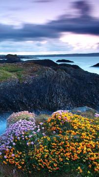 岩岸高地鲜花,锁屏图片,高清手机壁纸,风景-好运图库