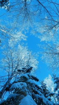 冬天树顶蓝天,锁屏图片,高清手机壁纸,风景-好运图库