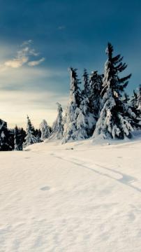冬季森林雪道蓝天,锁屏图片,高清手机壁纸,风景-好运图库