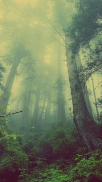绿色森林雾蒙蒙,锁屏图片,高清手机壁纸,风景-好运图库