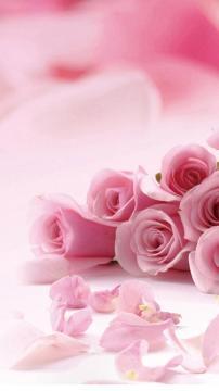 粉红玫瑰花瓣,锁屏图片,高清手机壁纸,风景-好运图库